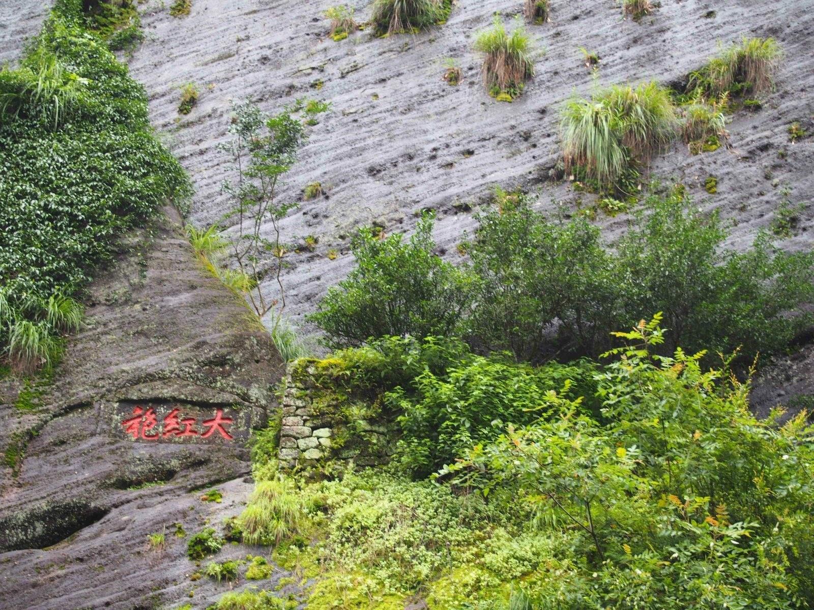 武夷岩茶大红袍母树