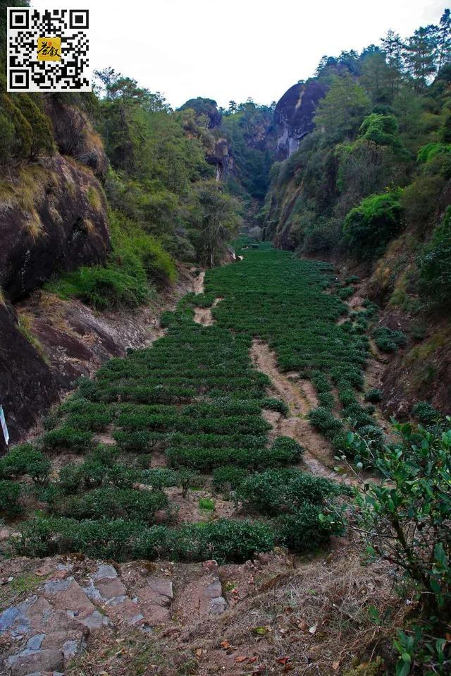 岩茶知识:为什么说武夷岩茶是茶中贵族?