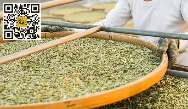 白茶知识:什么是白茶萎凋工艺?室外阳光萎凋和室内萎凋有什么不同?