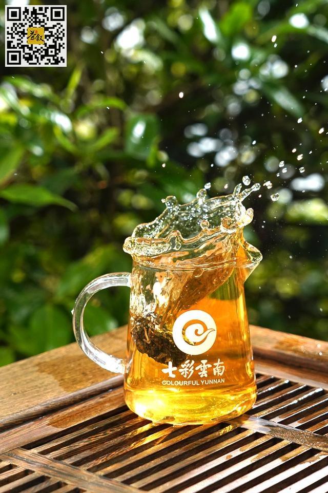 普洱茶知识:冰岛普洱600年单株古树茶明前开采现场,邂逅一场无与伦比的味觉盛宴