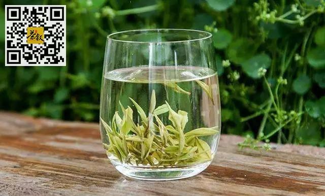泡茶方法:怎么冲泡绿茶?教你绿茶的冲泡方法