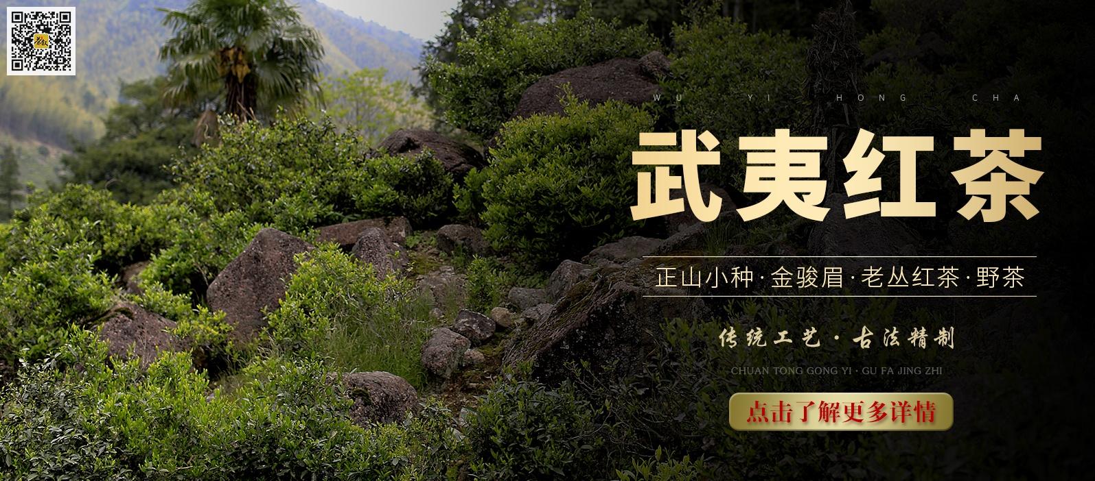 武夷红茶海报图片