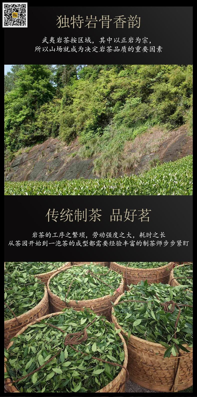 老丛水仙采茶图