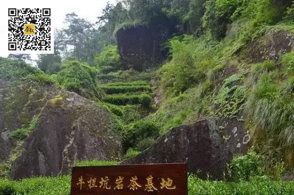 武夷岩茶山场之牛栏坑
