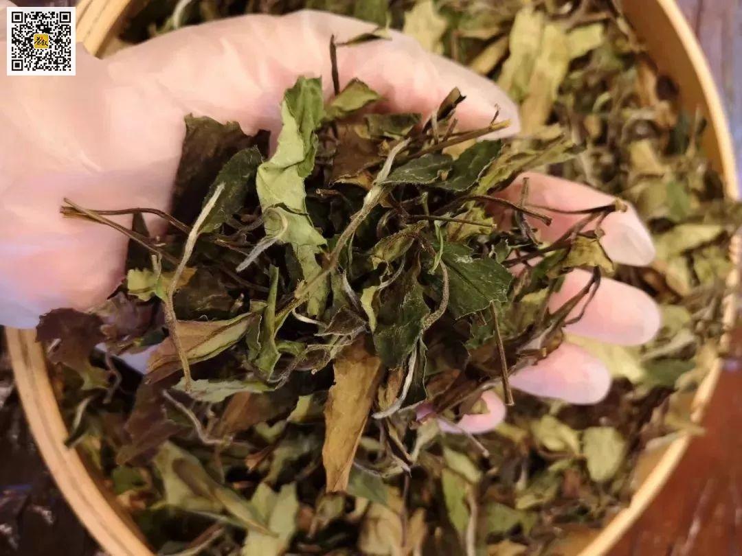 春寿眉白茶