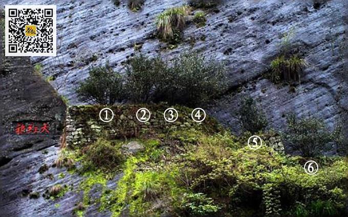 九龙窠大红袍母树品种