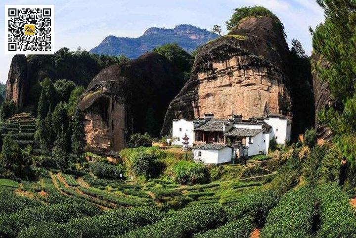 武夷岩茶马头岩肉桂茶园