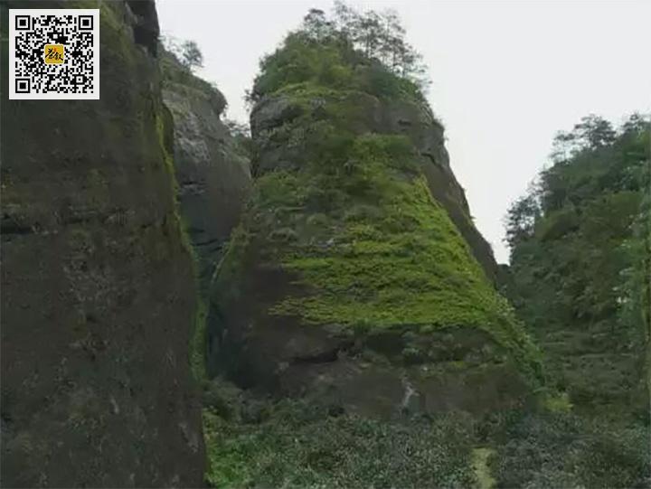 武夷岩茶鬼洞山场