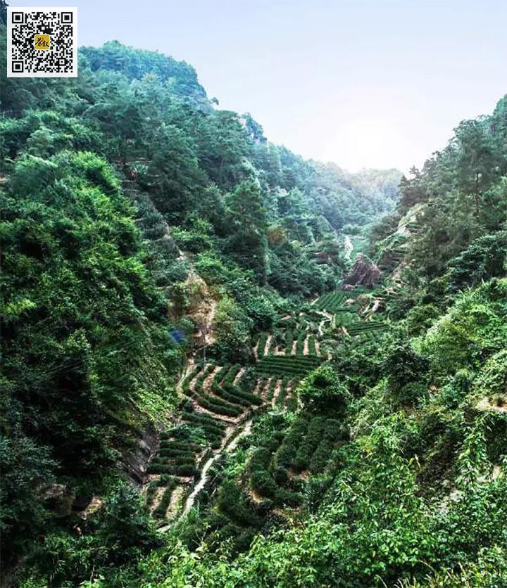 武夷岩茶牛栏坑山场