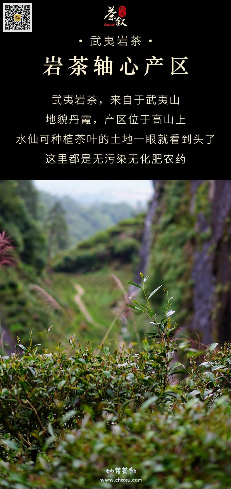 水仙岩茶工作茶产自武夷山高山茶区