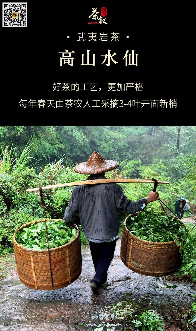 水仙岩茶工作茶每年春节采摘