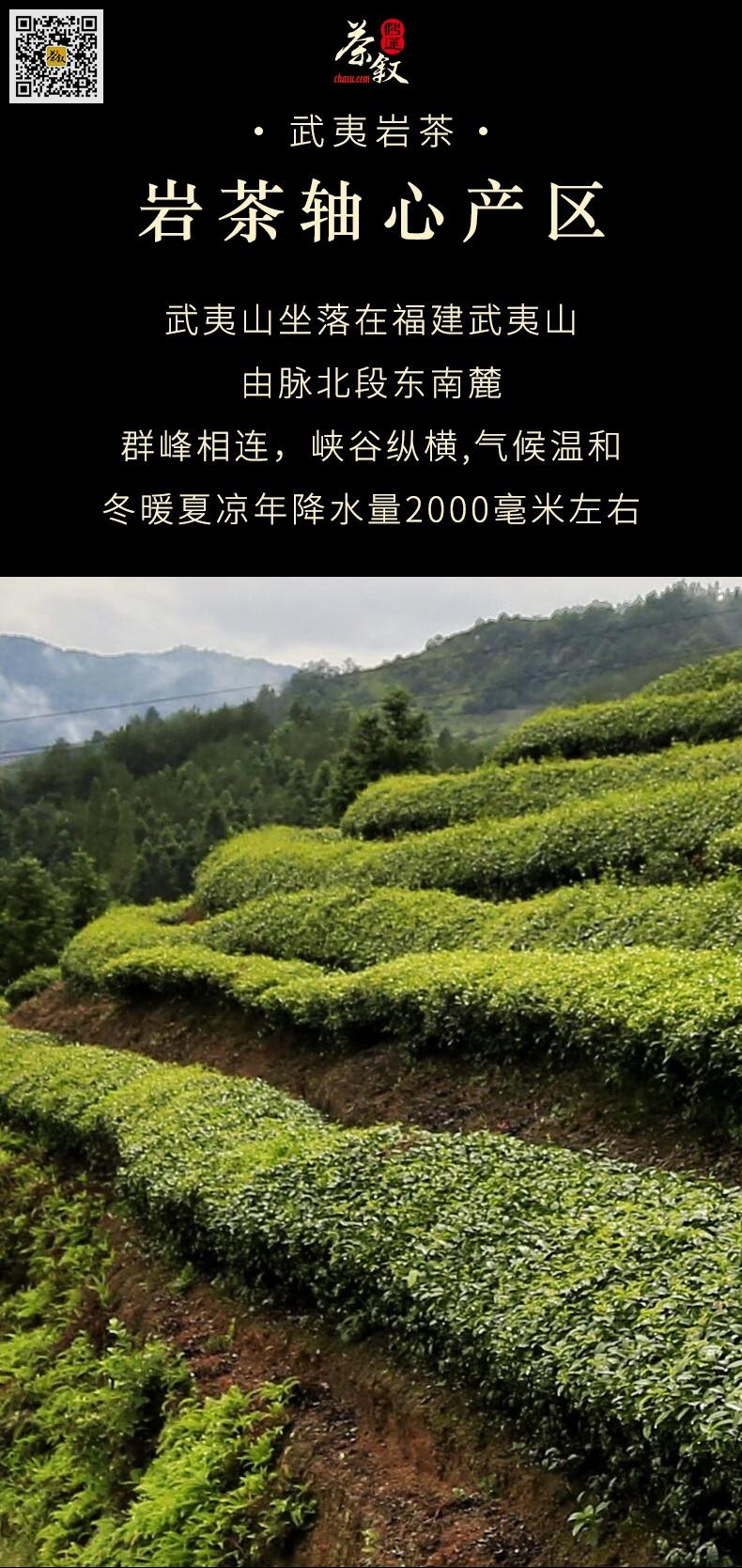 肉桂岩茶工作茶产自武夷山高山茶区
