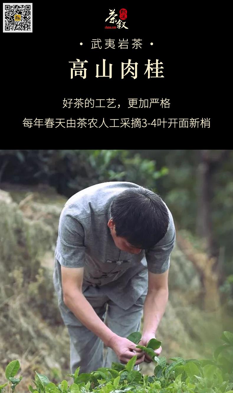 肉桂岩茶每年春季采摘