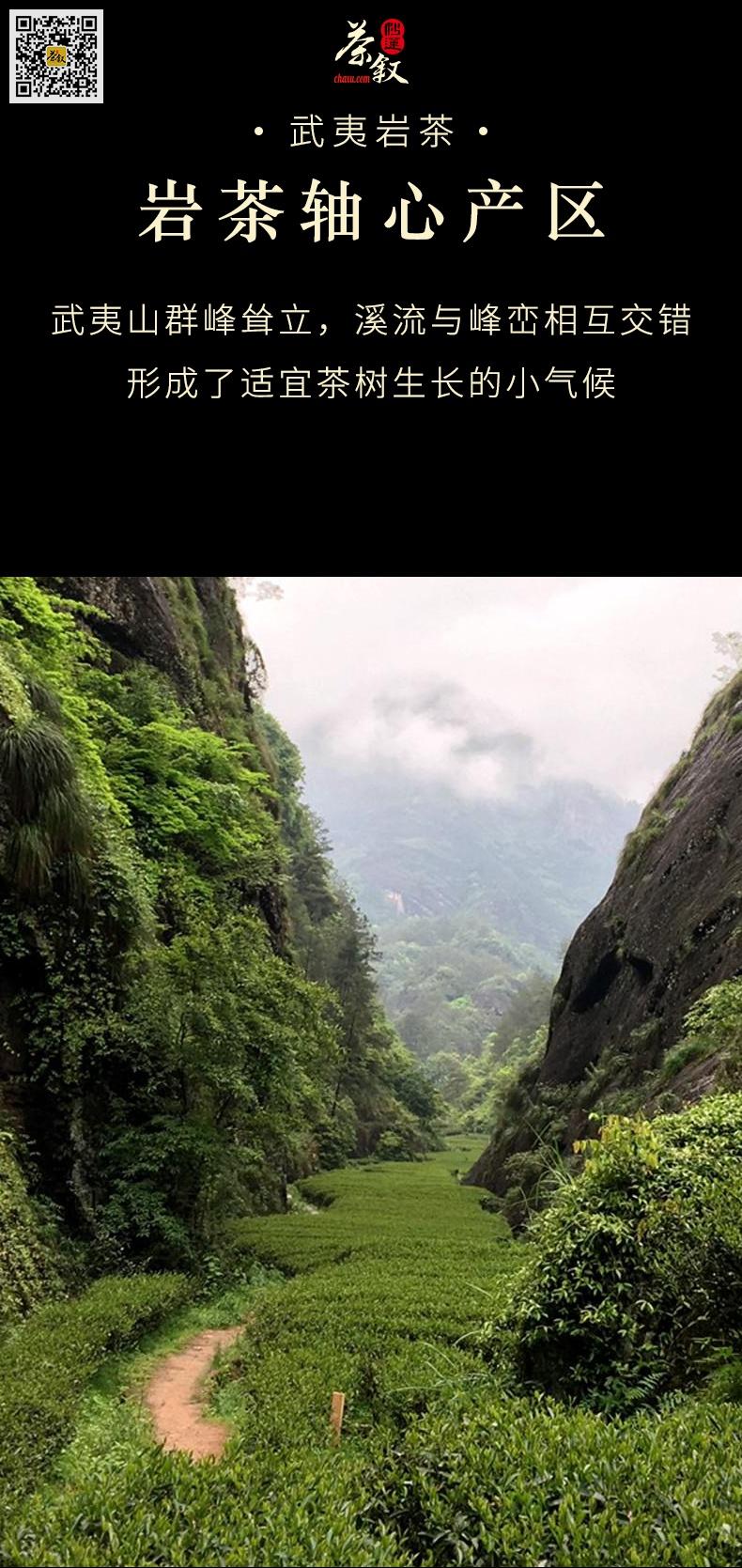 武夷岩茶大红袍产自武夷山高山茶区