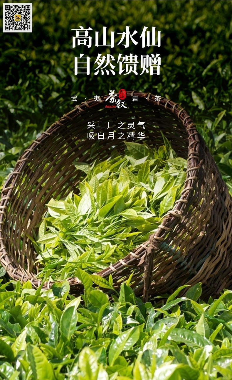 散茶铁罐装高山水仙茶青鲜叶采摘要求