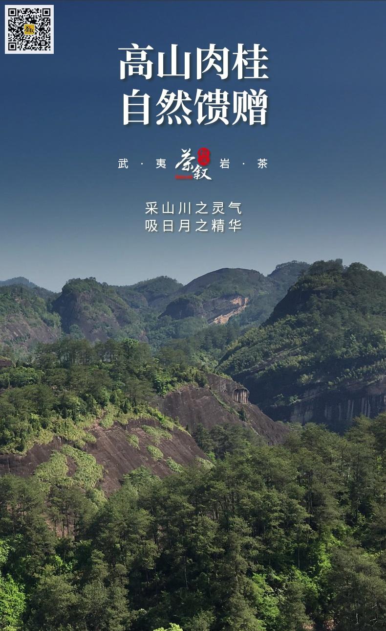 铁罐装散茶高山肉桂山场介绍