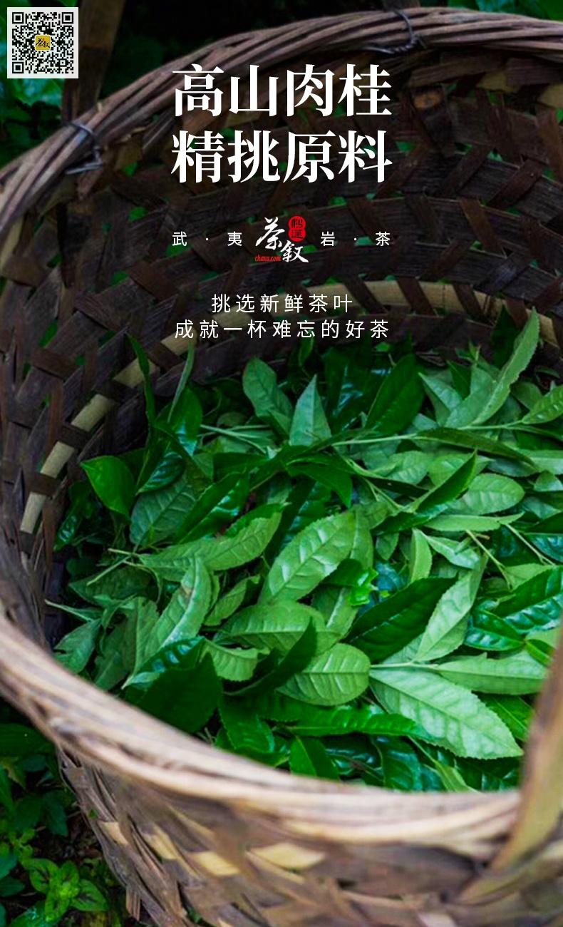 铁罐装散茶高山肉桂茶青鲜叶采摘要求