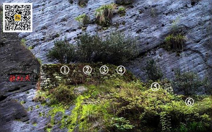 武夷山九龙窠大红袍母树编号