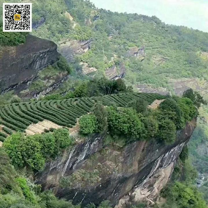 武夷岩茶山场特征