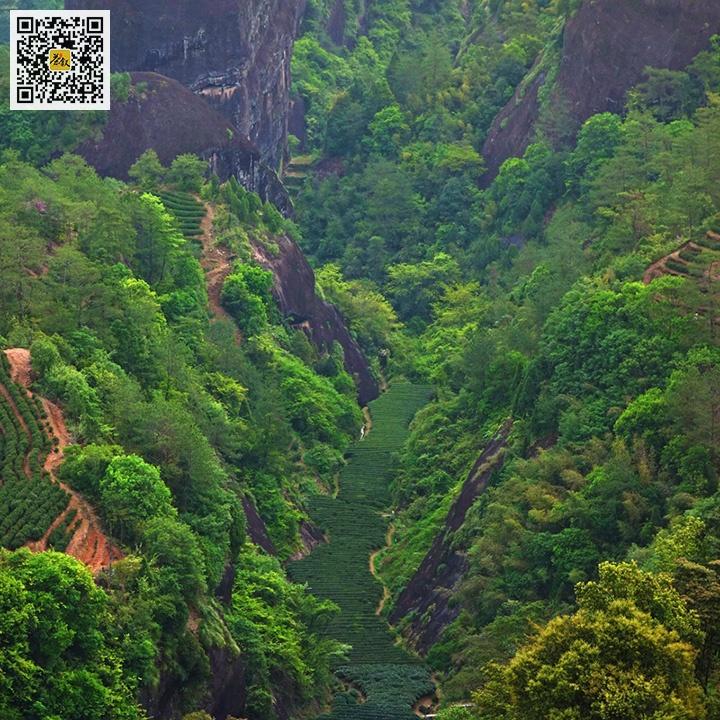武夷岩茶独特的微域气候环境